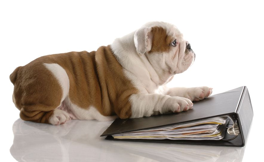 This is a photo for a Bulldog and a notebook guide