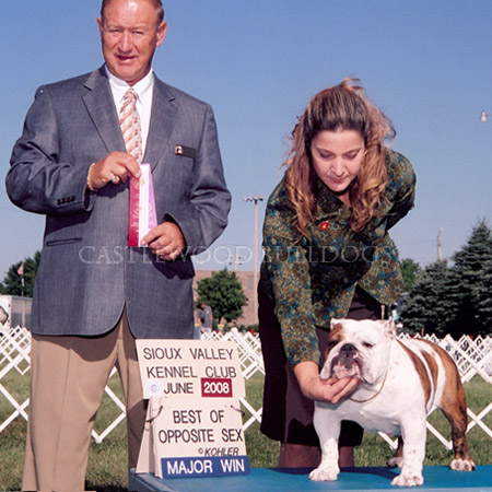 This is a photo of one of Castlewood Prize winning English Bulldogs taking major win in sioux valley kennel club dog show june 2008