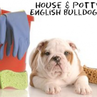 House-and-Potty-Training-English-BUlldog-puppies1-150x70
