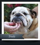 Trudy-Thumnail-135x150