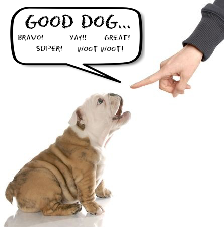 This is a photo of praising a English bulldog puppy